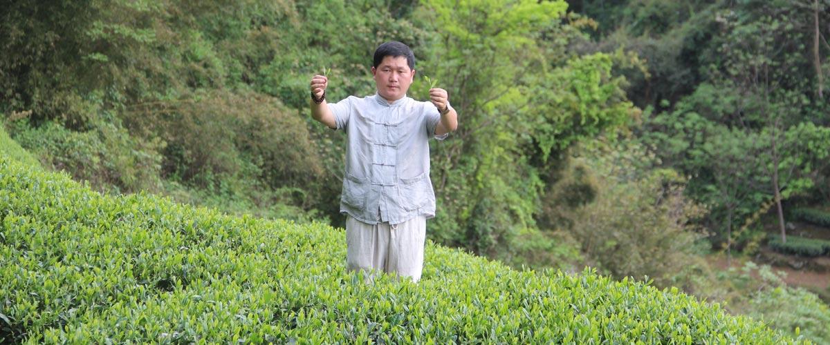 Чайный мастер Олег на плантации чая